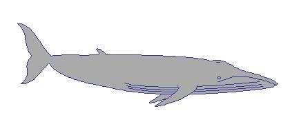 Help With Essay: Whale Rider Essay